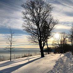 Afternoon walk.🌲❄️ #snow #walking #oilpainting #oilpaintinglovers #tree #winterwonderland #wintersun #lakeside #lakeview #sunsetsky #afternoonsun #ig #sunrays #oshawa Winter Sun, Sunset Sky, Lake View, Winter Wonderland, Ontario, Walking, Snow, Photo And Video, Park