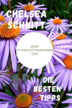 Mit dieser Schnitt Technik die Standhaftigkeit der Pflanzen erhöhen und die Blüte verlängern Chelsea, Plants, Pictures, Shade Perennials, Tips, Plant, Planets, Chelsea Fc