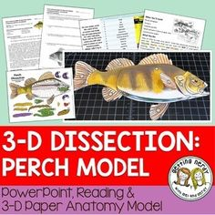 Feast your eyes on this Perch-fect dissection model! Our Scienstructable dissection models can be used as a dissection-free exploration, a pre-dissection tool, or as a summative assessment for comparative anatomy. Grab your pole and let's go fishing! Biology Lessons, Science Lessons, Teaching Science, Science Education, Life Science, Science Vocabulary, Human Body Activities, Steam Activities, Absent Students