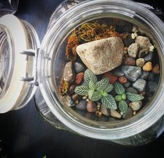 Just planted this closed system with some tiny little nerve plants. I'm so excited to see how they grow!  #rocks #moss #masonjar #mason #closedsystem #nerveplant #cactuslover  #succulent #succulents #succulove  #succulentobsessed #succulentlove #cactus #urbangarden #tillthesill #botanical #plant #plantlove #gardenlove #garden #gardening #windowsillgarden #terrarium #terrariums #littleglassworlds #micro #contrast #ecosystem #grow
