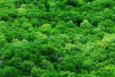 Costa Rica lanza plan para proteger bosques y animales Costa Rica, Herbs, I Will Protect You, Water, Colombia, Nature, Animals, Photos, Forests