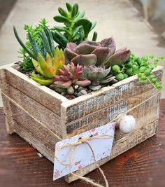 57 ideas for succulent in containers terrariums planters Succulent Gifts, Succulent Bouquet, Succulent Care, Succulent Gardening, Succulent Arrangements, Succulent Terrarium, Garden Planters, Container Gardening, Succulent Boxes