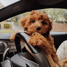 Super Cute Puppies, Cute Little Puppies, Cute Little Animals, Cute Dogs And Puppies, Cute Funny Animals, Doggies, Puppies Tips, Baby Dogs, Pet Dogs