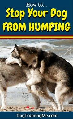 Do you want to know how to stop your dog from humping? Prevent further embarrassment and learn why your dog humps, and some ways you can stop your dog's humping for good in our article!