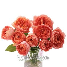 Orange Garden Rose garden rose sunset blend | gardens, flowers and weddings