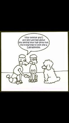 The Poodle Patch — LOL!