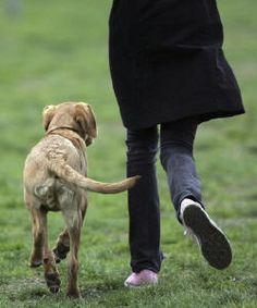 Meu depoimento pessoal, minha história...   por Luisa Mell, ativista protetora das causas dos animais.    Já se passaram 9 meses desde que deram alguns dias de vida para minha cadela Dino.  Há 9 meses minha família recebeu a notícia que a nossa amada cadela Dino, de 14 anos, estava com os dias conta...