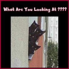 Frigging Nosy Neighbors !!!!