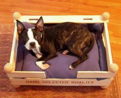 Marvelously Messy : Bulb Box to Dog Bed