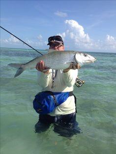 Bonefish, fly fishing bahamas!   nice catch   large bonefish