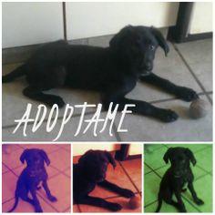 Adoptado!
