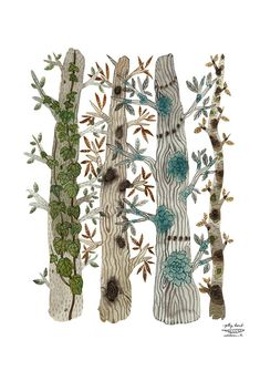 GRANDES árboles en el bosque de impresión impresión por GollyBard