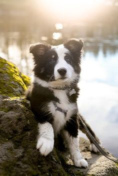 I want to cuddle this guy! #bordercollie