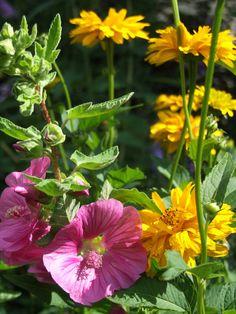 Sommerblumen im August im Künstlergarten von Gudrun Greeven in Loquard.