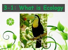 This powerpoint and Guided Notes set is used to discuss the concept of Ecology. The powerpoint and guided notes correspond to Section Energy, . Biology Textbook, Biology Teacher, Daily Objectives, Cornell Notes, High School Biology, Chapter 3, Future Classroom, Ecology, Concept