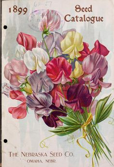 1899 Nebraska Seed Co catalog with sweet pea cover