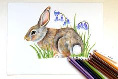 Items similar to Original bluebell bunny drawing 9 x rabbit, colour pencil, wildlife art on Etsy Bunny Drawing, Mini Canvas, Animal Totems, Wildlife Art, Woodland Animals, Pagan, Colored Pencils, Colours, Drawings