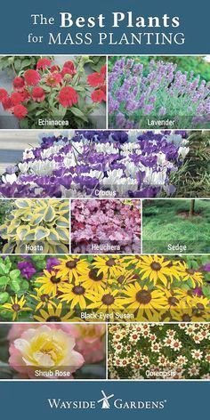 Landscape Gardening Book Your Landscape Gardening In Hindi Plus Landscape Gardening How Much Does It Cost Than Diy Backy Plants Flower Landscape Outdoor Plants