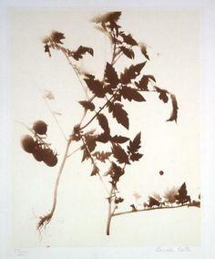 Lourdes Castro : S/ título. Fototipia. Centro de Arte Moderna - Fundação Calouste Gulbenkian