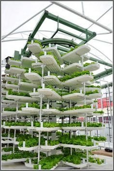 Vertical farming in British Columbia - Time Magazine's Names Valcent's Vertical Farming Technology one of Top 50 Best Innovations of 2009 via City Farmer News Hydroponics System, Hydroponic Gardening, Organic Gardening, Aquaponics Diy, Aquaponics Greenhouse, Vertical Hydroponics, Hydroponic Lettuce, Vintage Gardening, Organic Farming