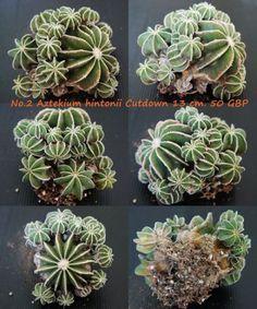 ... cactus succulents succulents