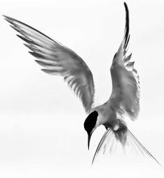 Watercolor, bird by VoyageVisuelle Bird Drawings, Animal Drawings, Watercolor Bird, Watercolor Paintings, Seagull Tattoo, Bird Art, Chinese Art, Art Techniques, Beautiful Birds