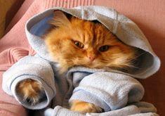 Cats In Hoodies
