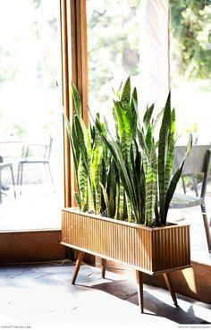 Stunning rectangular planter. Photographer: Andrea van der Spuy