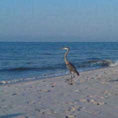 Fishing for breakfast! Gulf Shores, AL