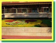 Disney Horticulture by the numbers