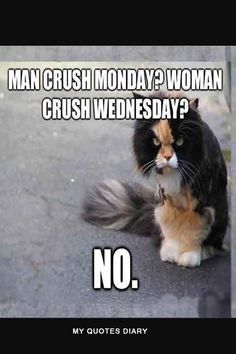 Man Crush Monday Quotes And Captions For Boyfriend Man Crush Monday Quotes, Happy Monday Quotes, Funny Cat Memes, Funny Man, Hilarious, Monday Inspirational Quotes, Angry Cat, Clipart Black And White, Famous Men