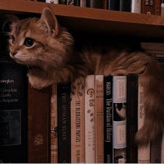Cat Aesthetic, Brown Aesthetic, Wow Photo, Images Harry Potter, Hogwarts Houses, Hogwarts Library, Tier Fotos, Hermione Granger, Ginny Weasley