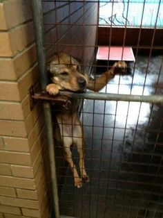 Foster. Sponsor. Adopt. Please do something to improve the life of a shelter animal. pic.twitter.com/bXa2GnjLk3