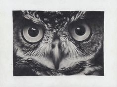 How to Draw an Owl Using Nobby Pencils by Nova Howe