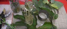 O metodă neobișnuită de înrădăcinare a plantelor. Funcționează 100%! - Sfaturi pentru casă și grădină Plant