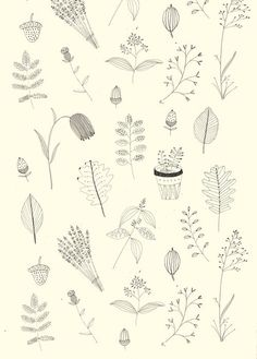 illustrations, cute, nature, botanical, plants