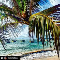 Paradise is the only way to describe it.... Turquoise water Colourful boats Amazing views.... Photo credits to @prontatour Reposted by @stockphotolk  Share your photographs with #stockphotolk Sign up on www.stockphoto.lk for free and convert your creativity into revenue! .  #srilanka #beach #ocean #sea #scenic #coconuttree #photography #travelgram #travelpics #travelporn #traveldiary #travelawesome #travelblogger #travelphotography #travelisthenewclub #wanderlust #igers #igtravel #netgeo…