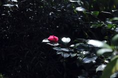 スクリーンショット 2014-02-18 16.35.40