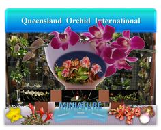 Miniature Orchids in Perspective 🔎✾🔍 Miniature Orchids, Growing Orchids, Orchidaceae, Planting Flowers, Perspective, Bloom, Miniatures, Plants, Orchid