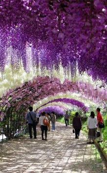 Ashikaga Flower Park | Travel | Vacation Ideas | Road Trip | Places to Visit | 09 | Tourist Attraction | City Park | Botanical Garden