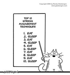 How to handle stress like a cat.  Works for me. #cats #humor