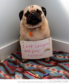 Dog shaming: Rainbow creator...  This is so my dog.  We go through so many boxes of crayons.