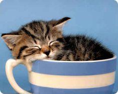 chaton endormi dans tasse rayures bleues blanches