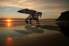 Pegasus, Ruck Rova on ArtStation at https://www.artstation.com/artwork/6kOKN