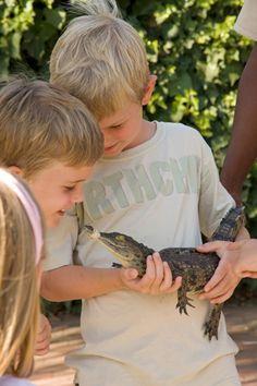 Le Bonheur Crocodile Farm | Between Paarl, Franschoek and Stellenbosch Cheetahs, Crocodiles, Wild Animals, Giraffe, Cape, African, Tours, Bonheur, Cabo