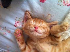 cheeky kittens - Google Search
