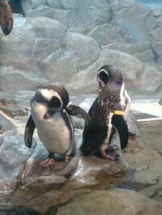 Shin Enoshima aquarium