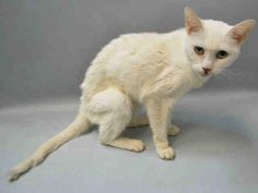 ANTARCTICA - A1064195 - - Brooklyn   ***TO BE DESTROYED 02/06/16*** POOR ANTARCTICA IS A 10 YEAR OLD GIRL WITH SOME HEALTH ISSUES – SHE NEEDS A COMPLETE VET ASSESSMENT BUT THE ACC WILL KILL HER BEFORE SHE HAS THAT CHANCE! ANTARCTICA is a seniorish girl of about 10 years old. She was found as a stray and most likely turned in to the shelter because the person felt it was better for her. ANTARCTICA has some health issues which need to be fully assessed by a competent ve