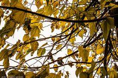 Le foglie ingiallite rappresentano l'autunno con tutta l'incertezza e la malinconia delle creature che ci abbandonano per sempre. Romano Battaglia, Foglie, 2009