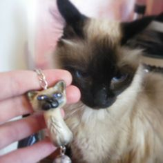 polymer clay fimo siamese cat